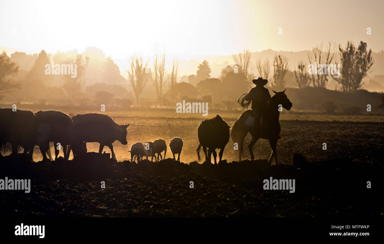 Cattle Rancher Stock Photos & Cattle Rancher Stock Images - Alamy