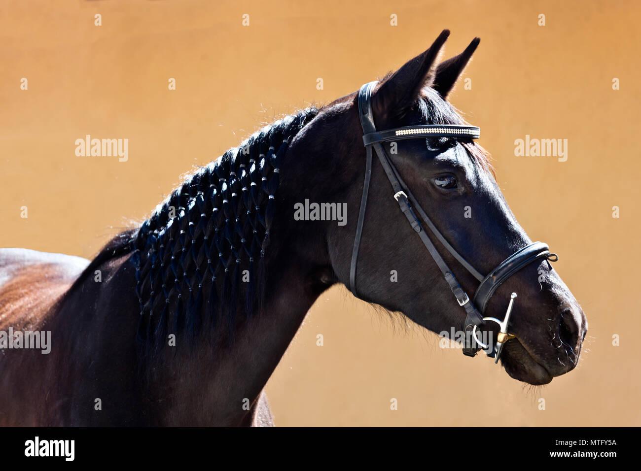A pure bred LUSITANO horse at Granitas de Animas Ranch - SAN MIGUEL DE ALLENDE, MEXICO - Stock Image
