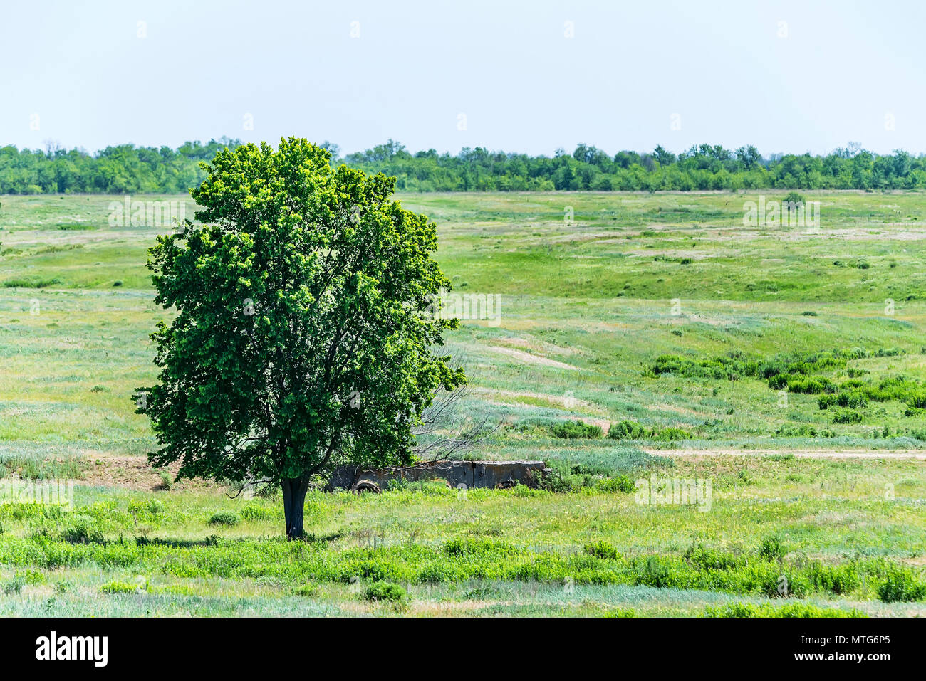 Lonely tree in summer steppe beautiful landscape - Stock Image