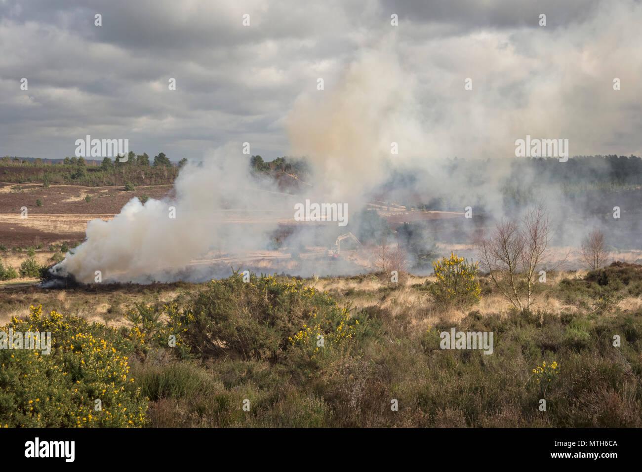 Scrub burning on Hankley Common in Surrey - Stock Image