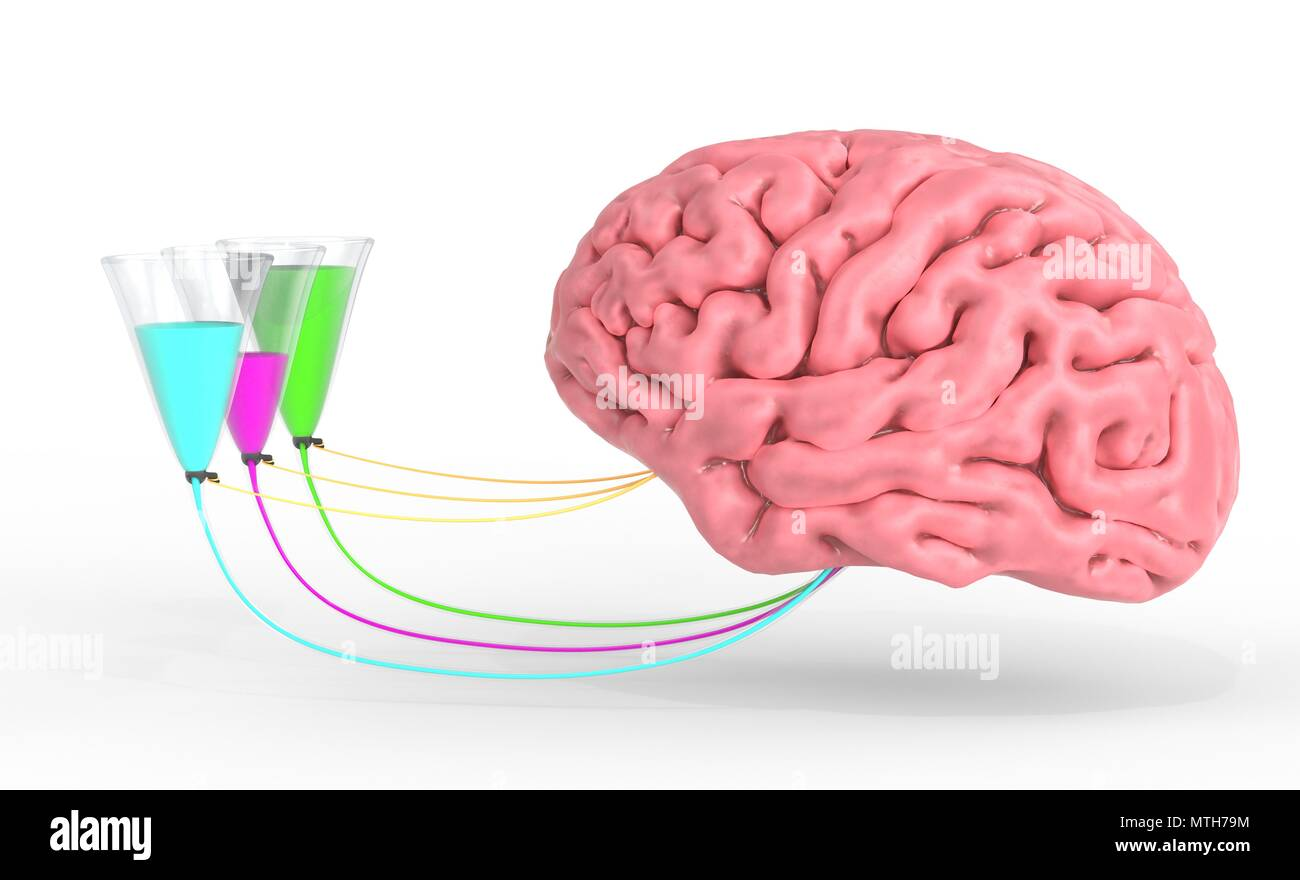 Brain control of human hormones and emotions. 3d illustration Stock ...