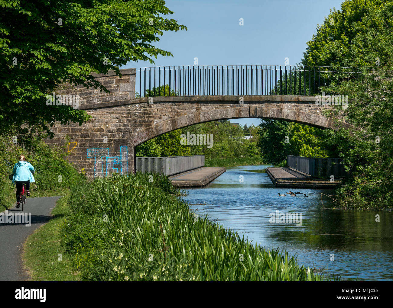 Woman riding bicycle on towpath, Union canal, Edinburgh, Scotland, UK, with aqueduct and ducks - Stock Image