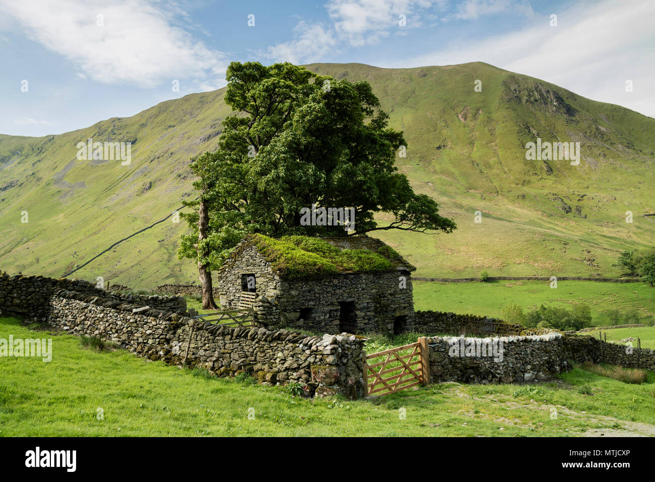 Traditional Old Stone Barn with the Mountain of Hartsop Dodd Behind, Hartsop, Lake District, Cumbria, UK - Stock Image