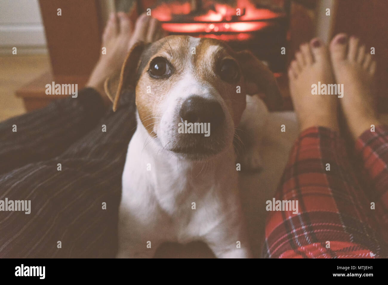 cozy winter evening on the eve of christmas childfree couple and rh alamy com Cozy Fireplace with Dog Cozy Fireplace with Hot Chocolate