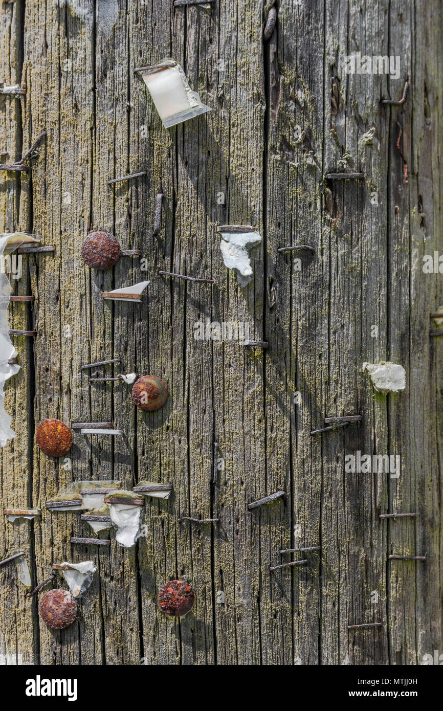 Gnarled wooden noticeboard with rusting old staples and rusty drawing pins - metaphor for lost messages, pin message here, deserted community. - Stock Image
