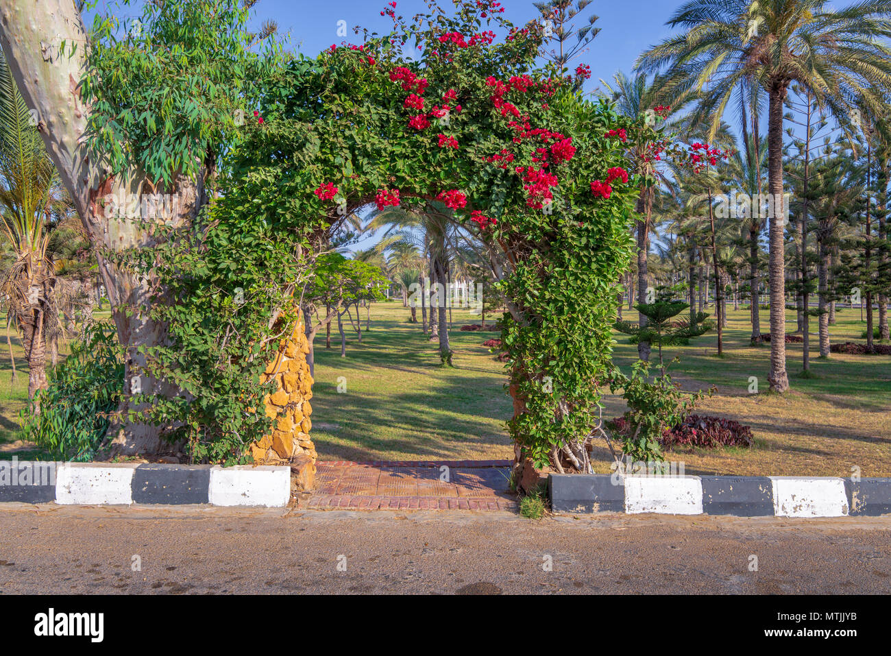 Natural rose garden arch covered with climbing plants at Montazah public park, Alexandria, Egypt - Stock Image