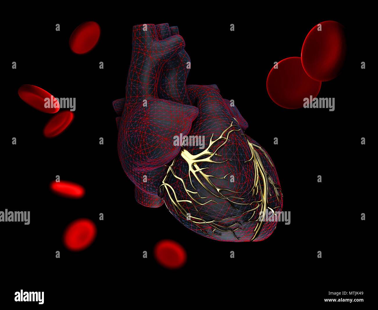 Cerebral Veins Stock Photos & Cerebral Veins Stock Images - Alamy