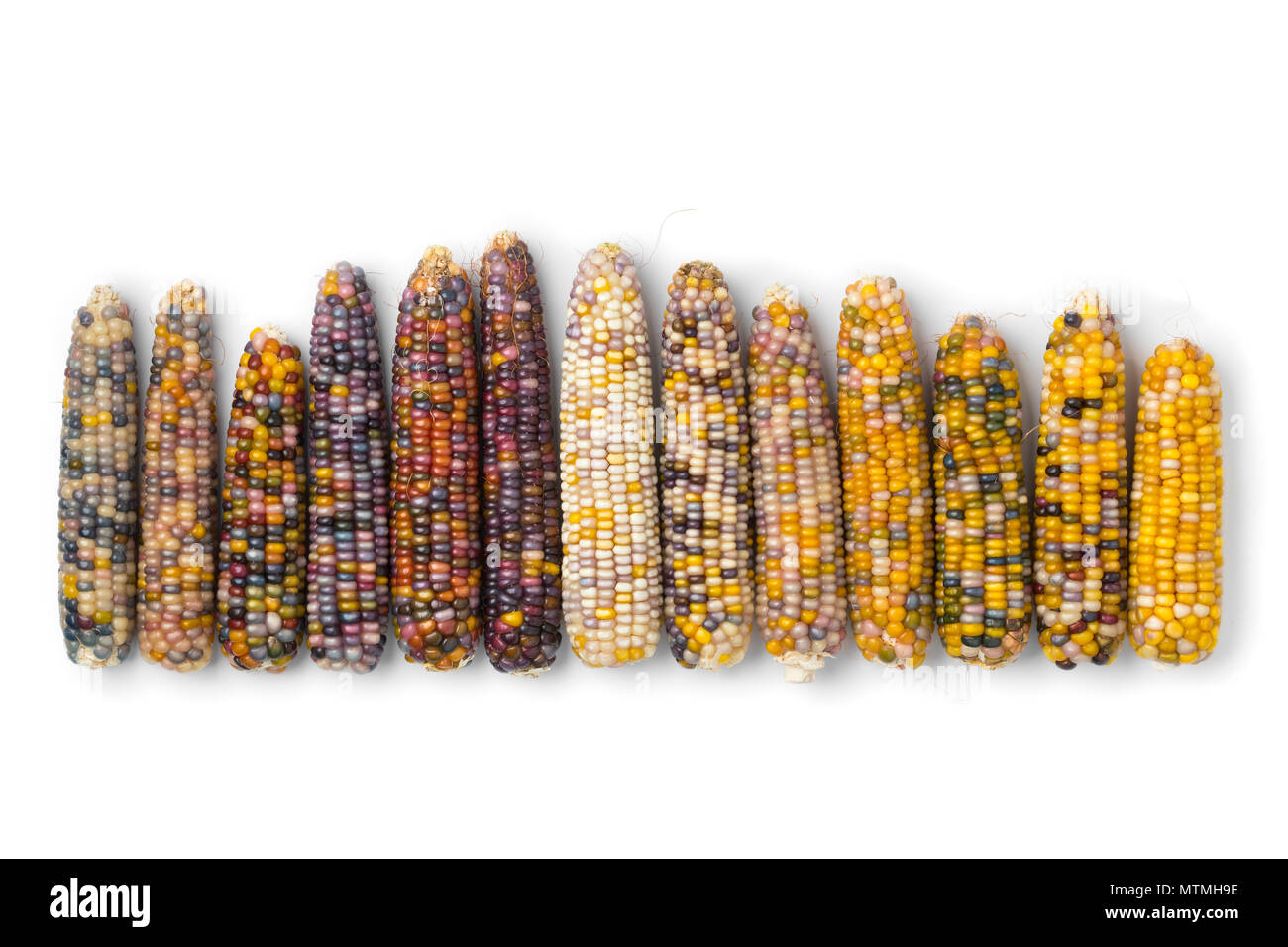 Row of fresh raw colorful gem glass corn on cob isolated on white background Stock Photo