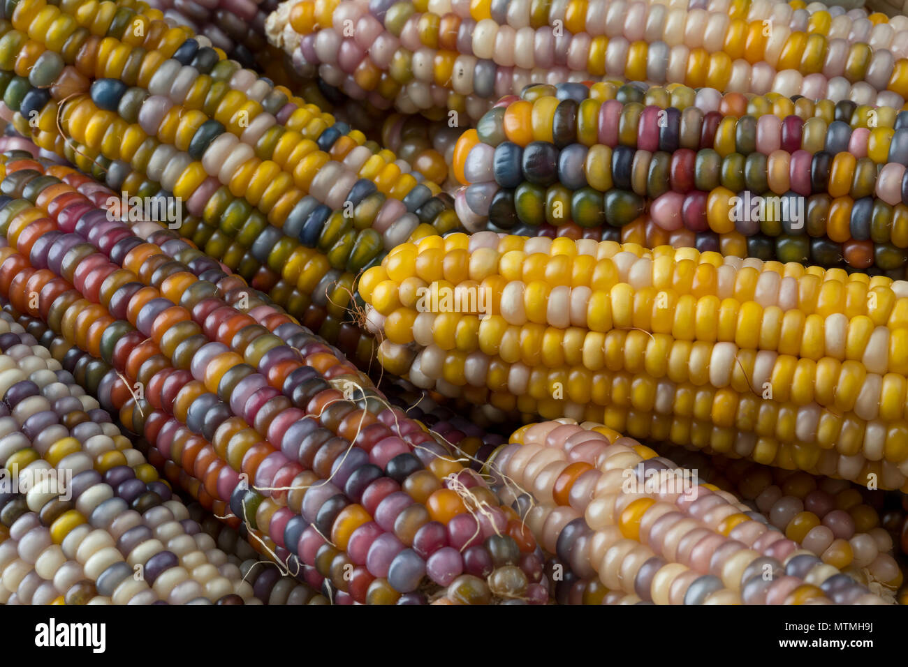 Gem Corn Stock Photos Gem Corn Stock Images Alamy