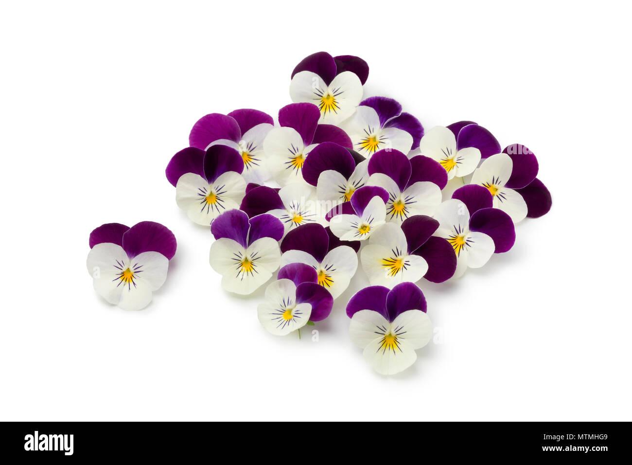 Fresh picked viola flowers isolated on white background - Stock Image