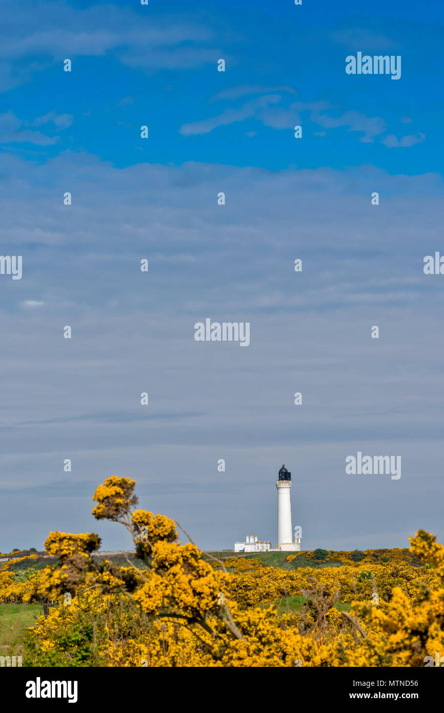 COVESEA LIGHTHOUSE LOSSIEMOUTH BEACH SCOTLAND WHITE COLUMN AND HOUSES SURROUNDED BY YELLOW GORSE FLOWERS IN EARLY SPRING - Stock Image