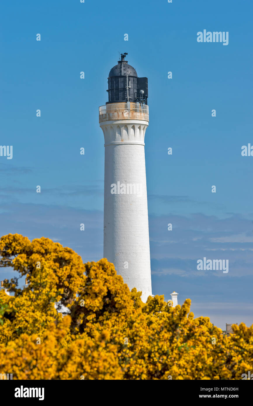 COVESEA LIGHTHOUSE LOSSIEMOUTH BEACH SCOTLAND WHITE COLUMN ON A HILL SURROUNDED BY YELLOW GORSE FLOWERS  AN EARLY MORNING IN SPRING - Stock Image