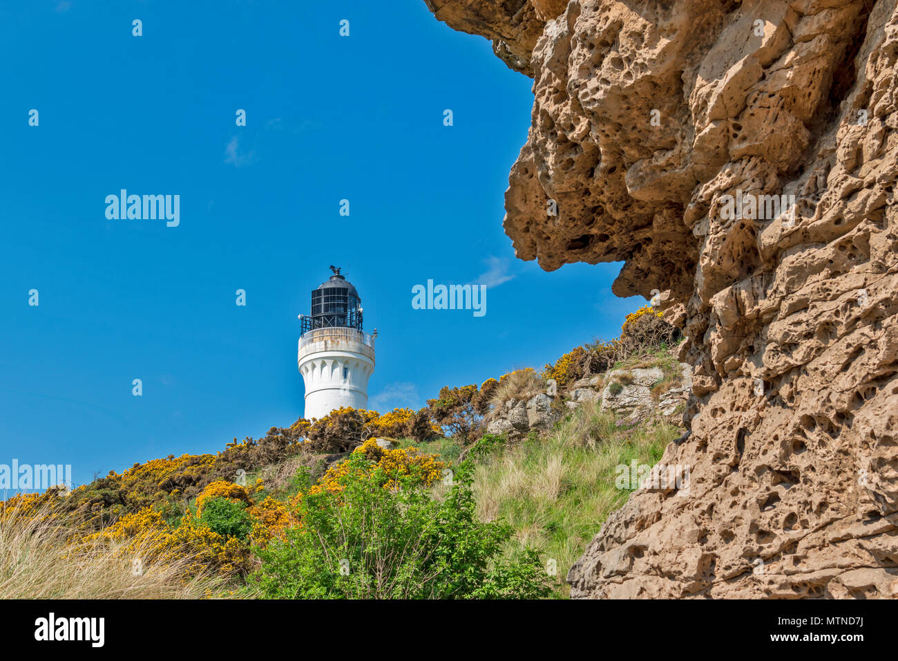 COVESEA LIGHTHOUSE LOSSIEMOUTH BEACH SCOTLAND WHITE COLUMN ON A HILL WITH ROCK AND YELLOW GORSE FLOWERS  AN EARLY MORNING IN SPRING - Stock Image