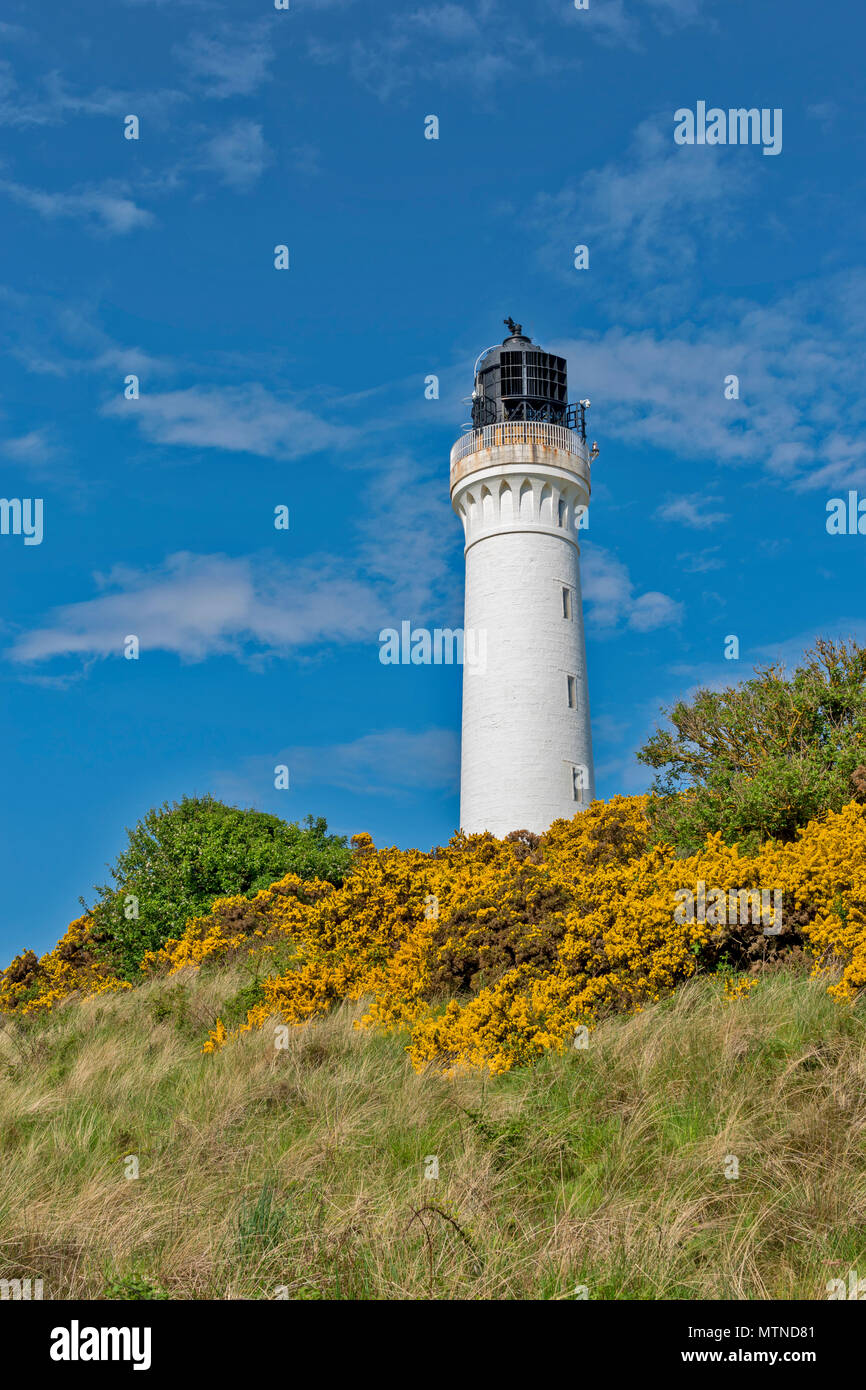 COVESEA LIGHTHOUSE LOSSIEMOUTH BEACH SCOTLAND WHITE COLUMN ON A HILL WITH YELLOW GORSE FLOWERS  AN EARLY MORNING IN SPRING WITH A BLUE SKY - Stock Image