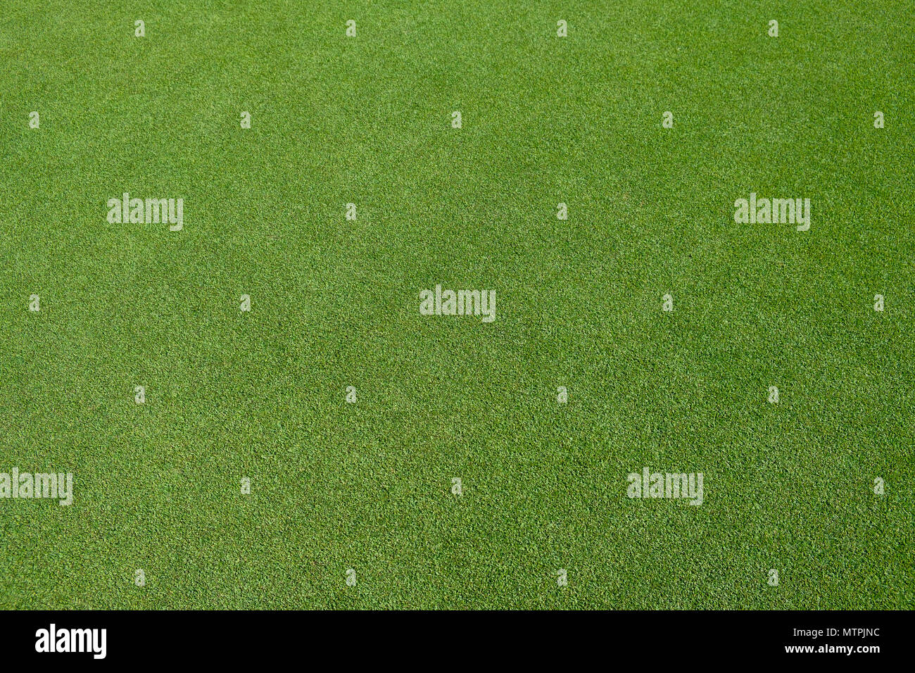 Golf green field - Stock Image