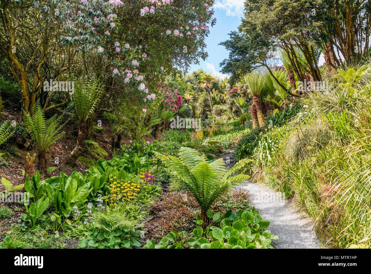 Subtropical Cascade Water Garden at the center of Trebah Garden, Cornwall, England, UK Stock Photo
