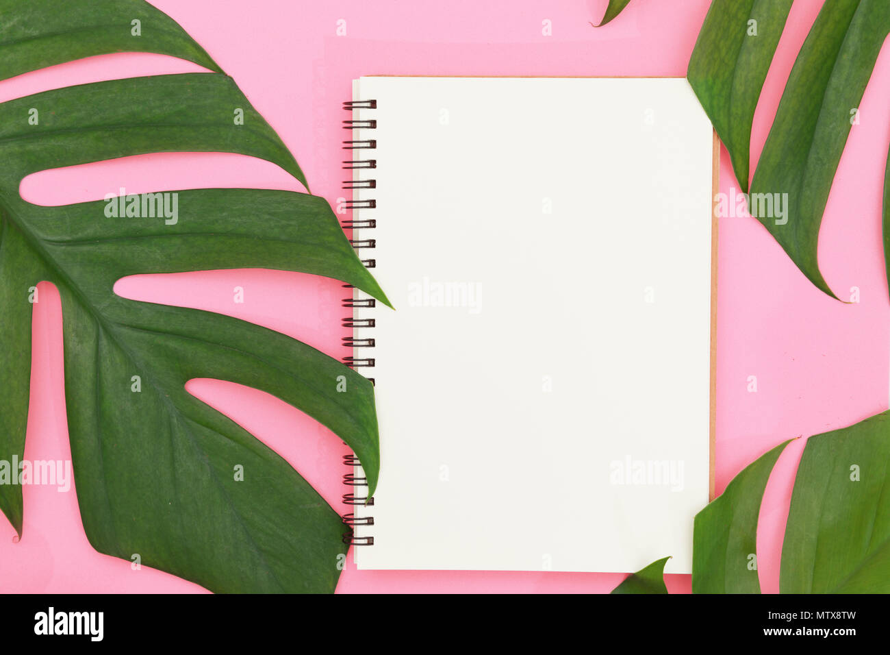 Tropical Top View Summer Botanical Concept Still Life White Frame Notebook With Monstera Liana Vine Palm Leaves Pink Background Flat Lay Layout Stock Photo Alamy Shop tropical leaves notebooks created by independent artists from around the globe. https www alamy com tropical top view summer botanical concept still life white frame notebook with monstera liana vine palm leaves pink background flat lay layout image187433145 html