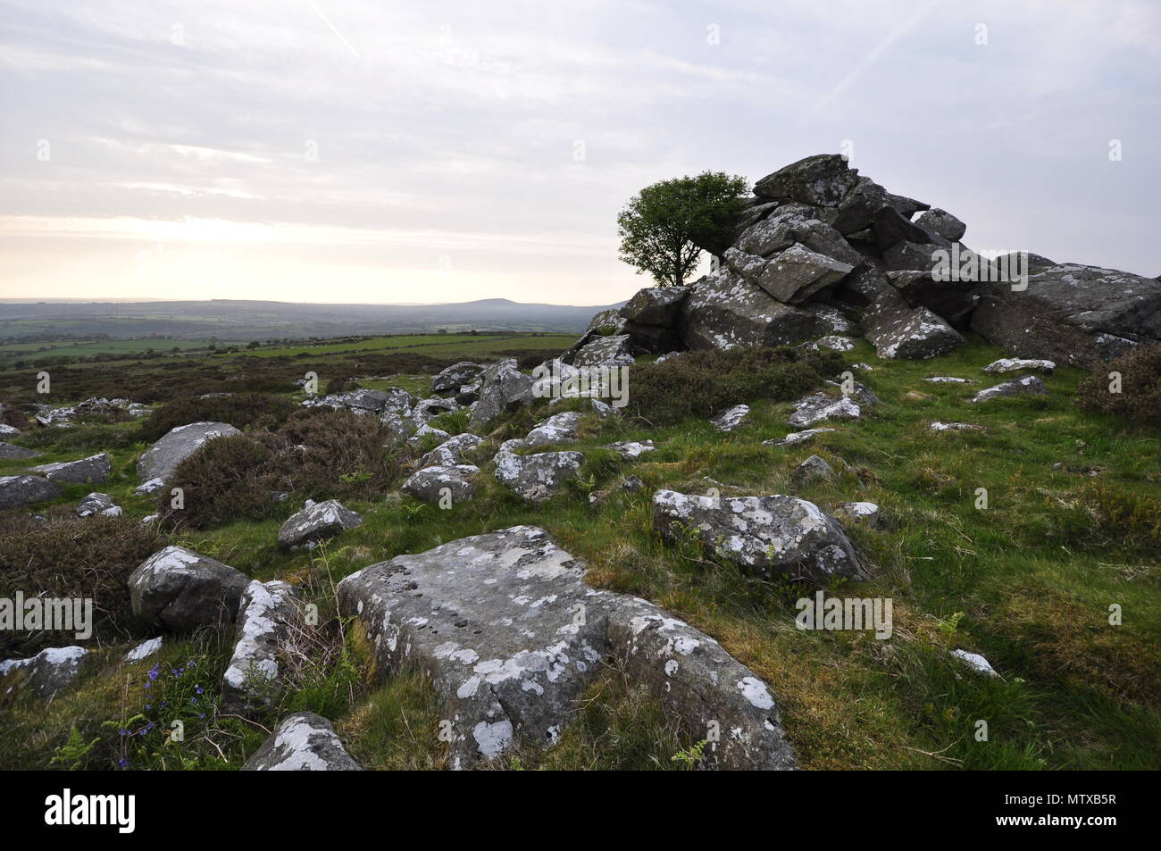Coed Ty Canol national nature reserve, Preselli Pembrokeshire Wales - Stock Image