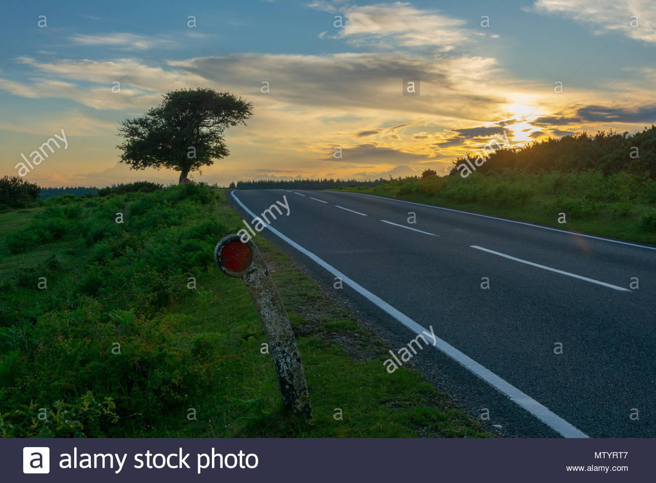 New Forest, Hampshire, England. Shower clouds and a golden sunset  behind a solitary roadside tree which has been shaped by the prevailing wind. - Stock Image