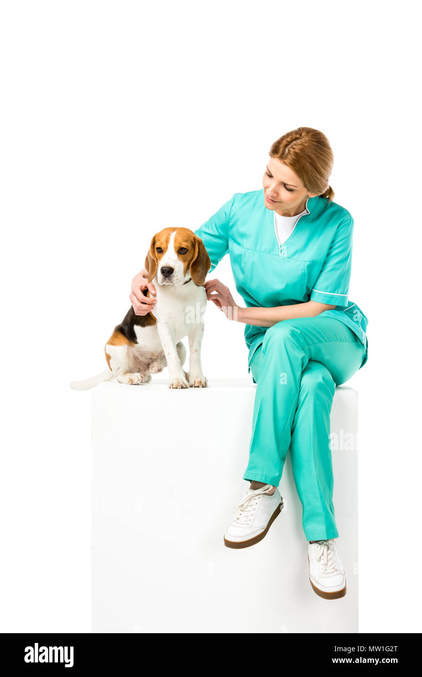 veterinarian in uniform sitting on white cube together with beagle dog isolated on white - Stock Image
