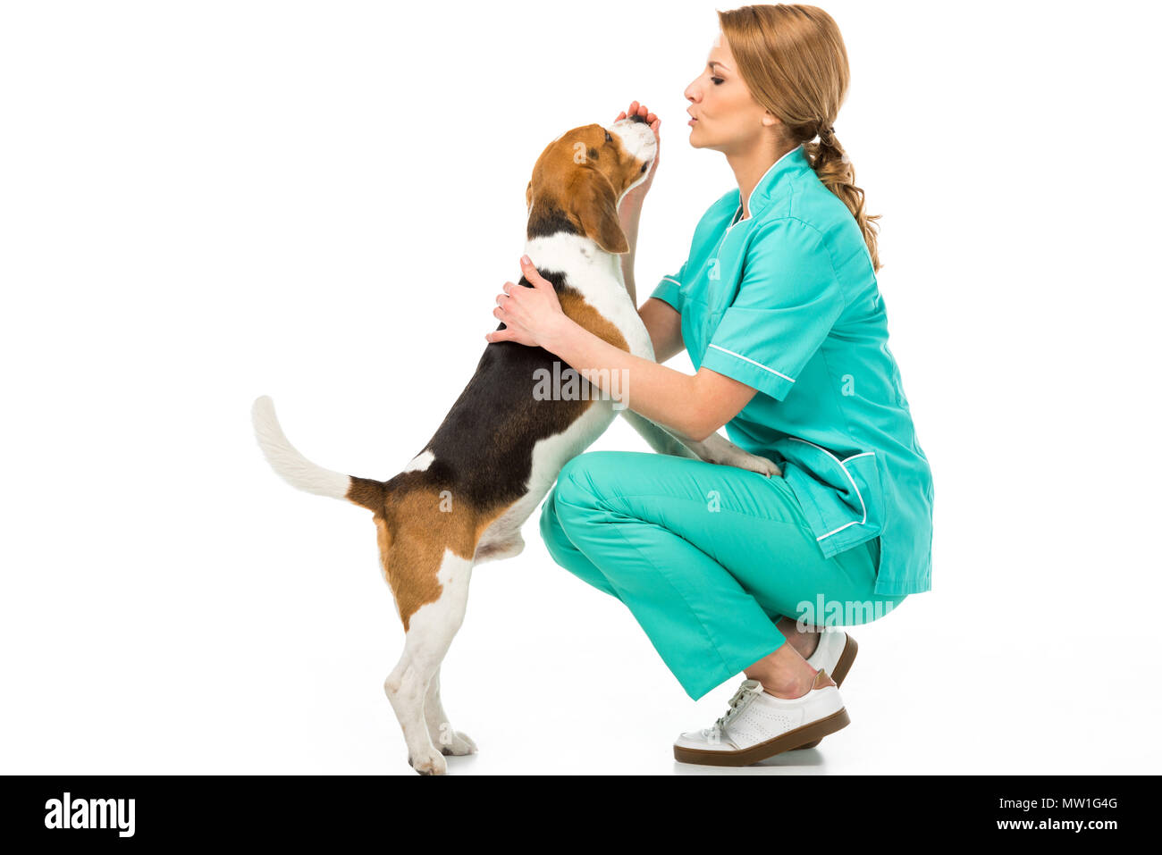side view of veterinarian in uniform with cute beagle dog isolated on white - Stock Image