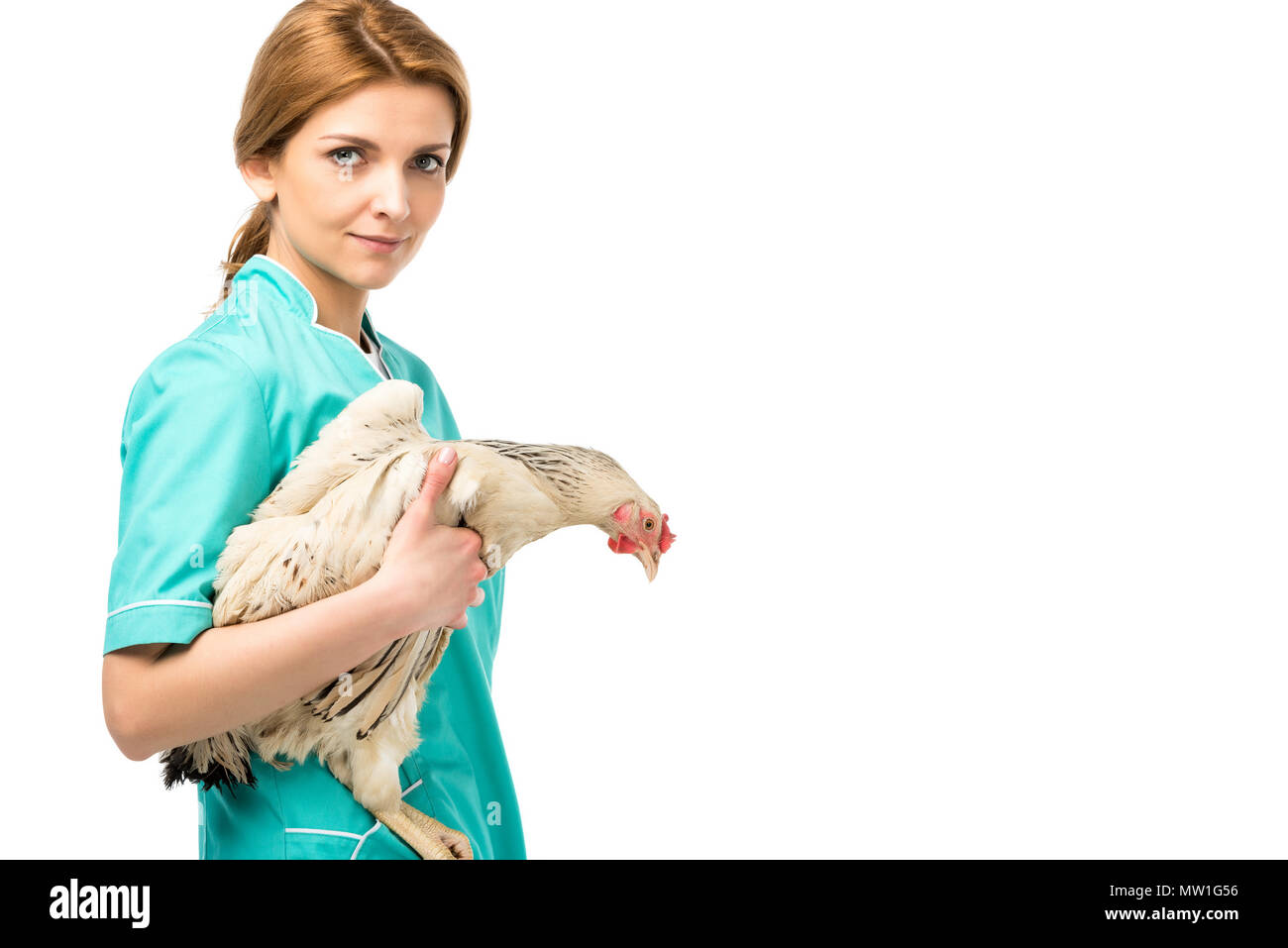 side view of veterinarian in uniform hooding chicken isolated on white - Stock Image