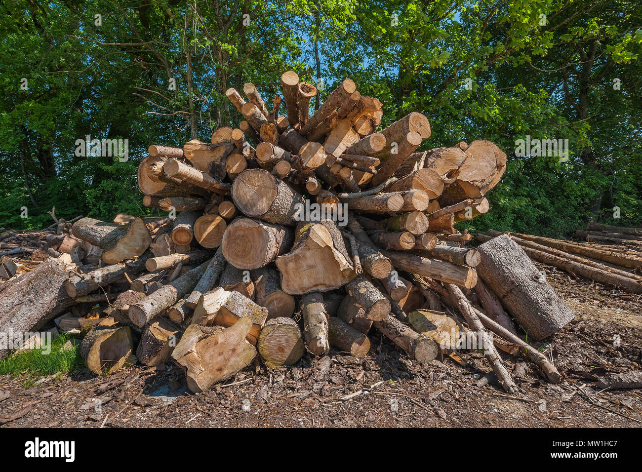 Felled spruces, woodpile with stacked tree trunks, Upper Bavaria, Bavaria, Germany - Stock Image
