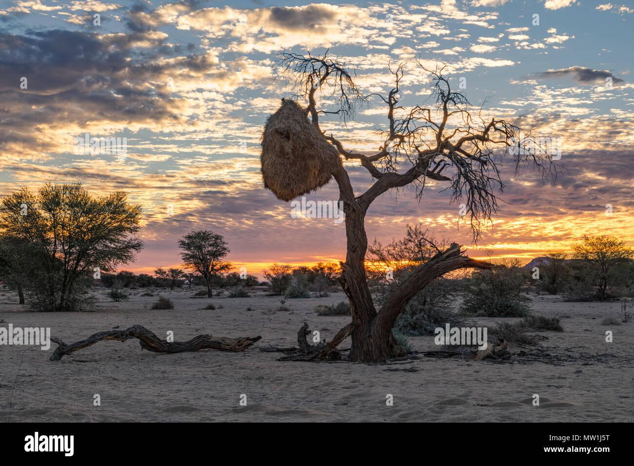 Aus, Namibia, Africa - Stock Image