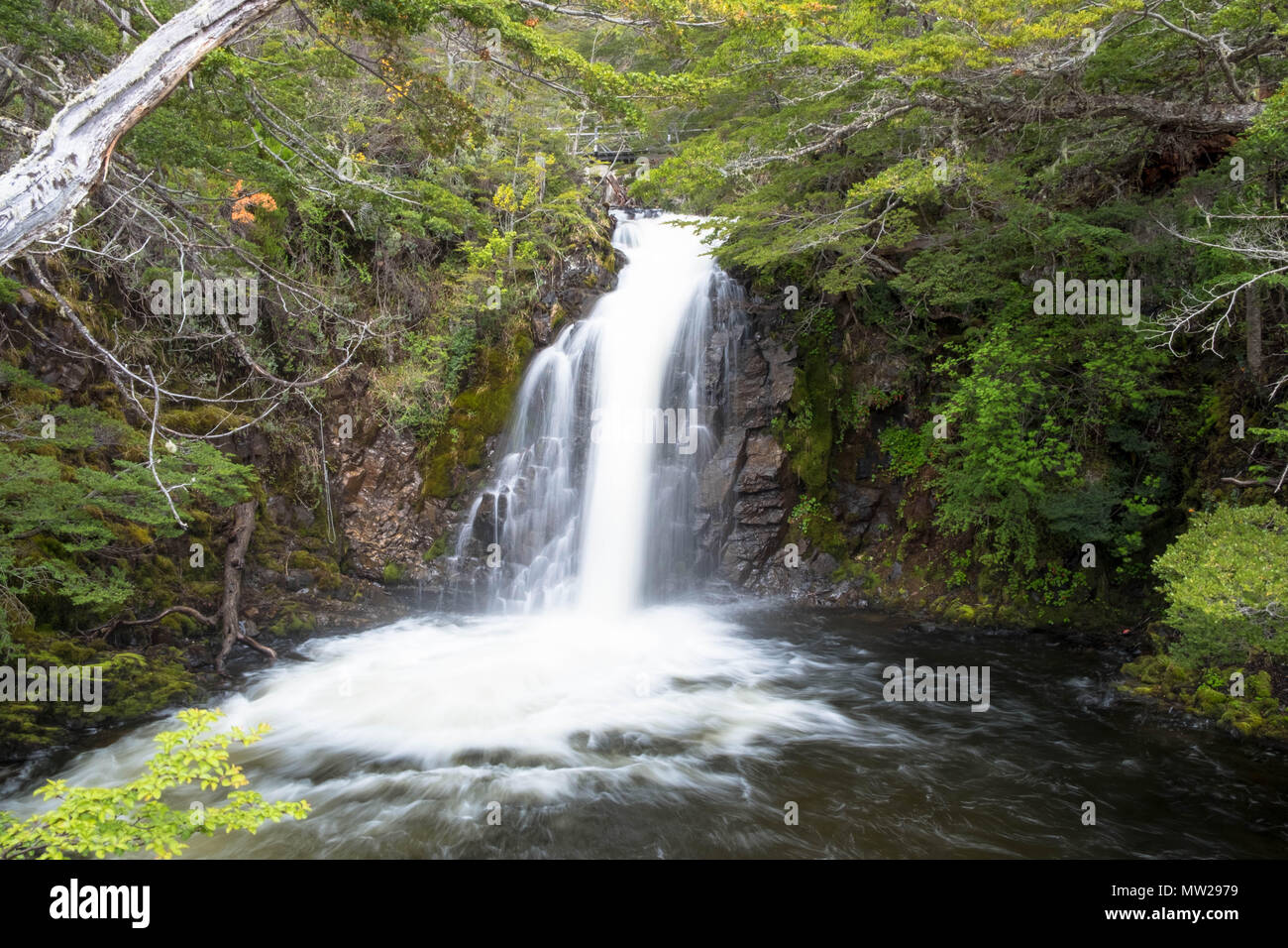A waterfall near Chilean Puerto Williams on Isla Navarino. It is the southernmost town worth that name before you reacht Antarctica. - Stock Image