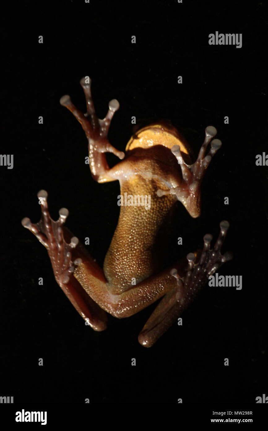 Frog from below - Stock Image