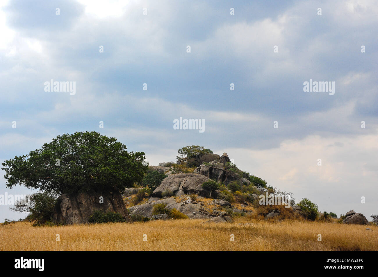 Beautiful Serengeti landscape. A rocky kopje stands in golden grassland with grey storm clouds overhead - Stock Image