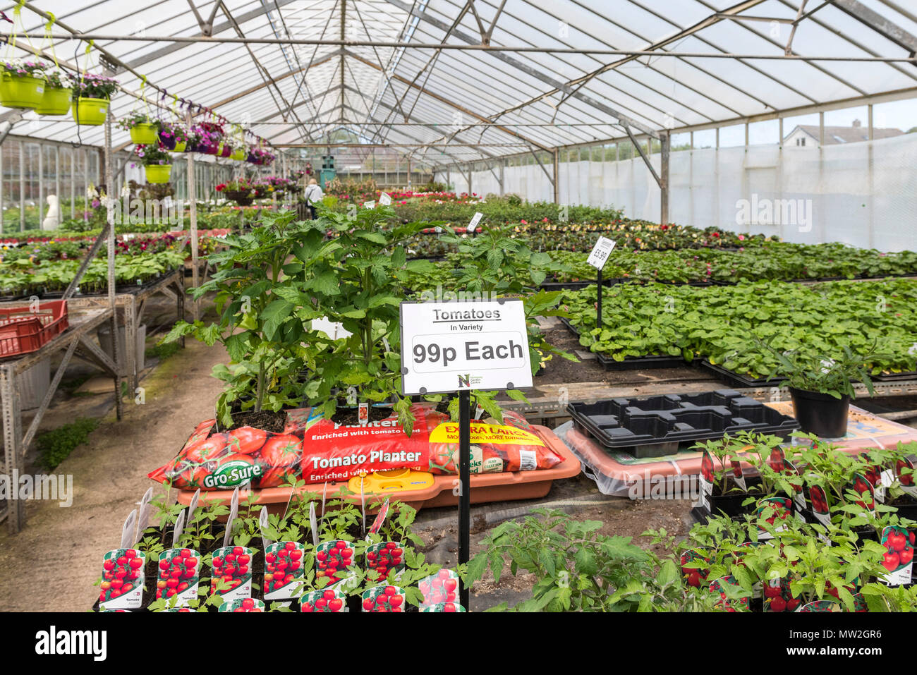 Plants for sale in a garden centre nursery in the UK. - Stock Image
