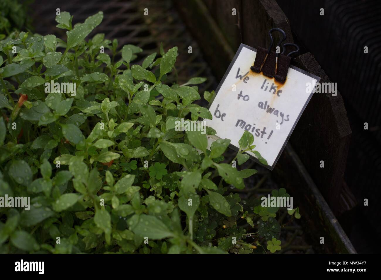A funny sign about liking to be 'moist', on a plant. - Stock Image