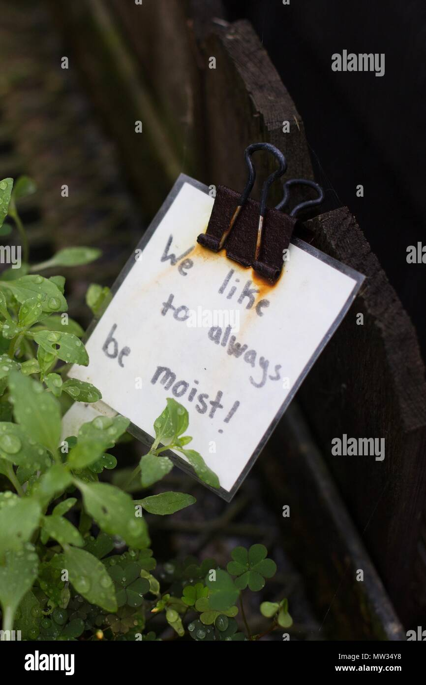 A funny sign about liking to be moist, on a plant. - Stock Image