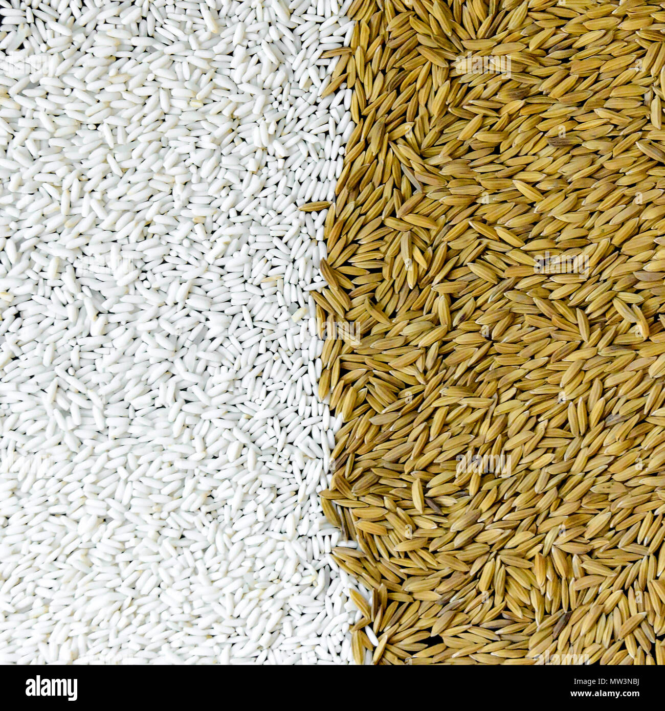 Background From Pile Of Paddy Rice And And Rice Seed Brown Of Rice Grain And Close Up Of Rice Pile Stock Photo Alamy