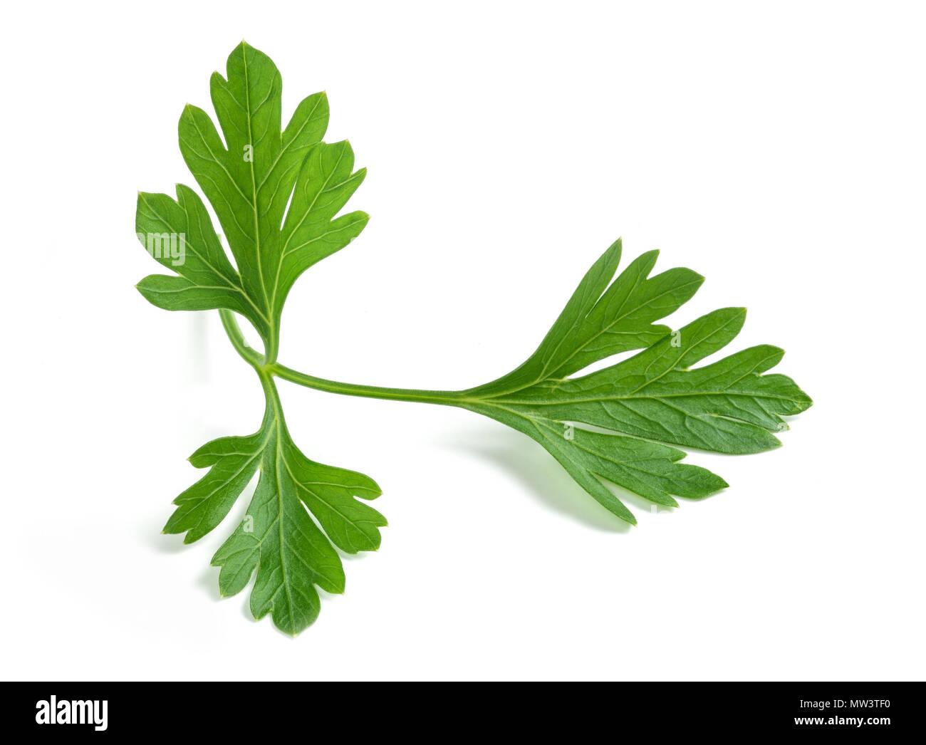 Fresh parsley sprigs isolated on white background - Stock Image