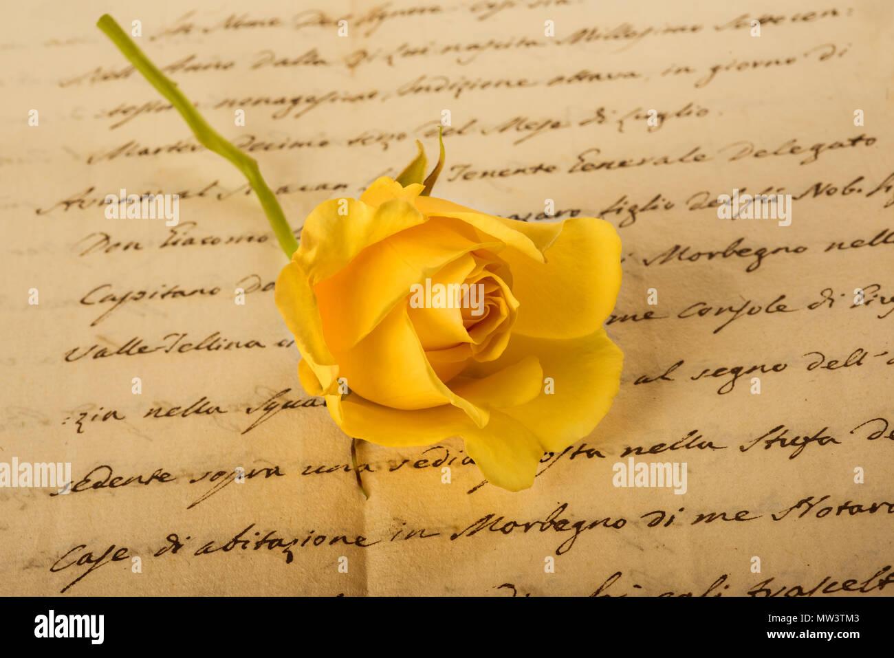Yellow rose on old handwriting - Stock Image