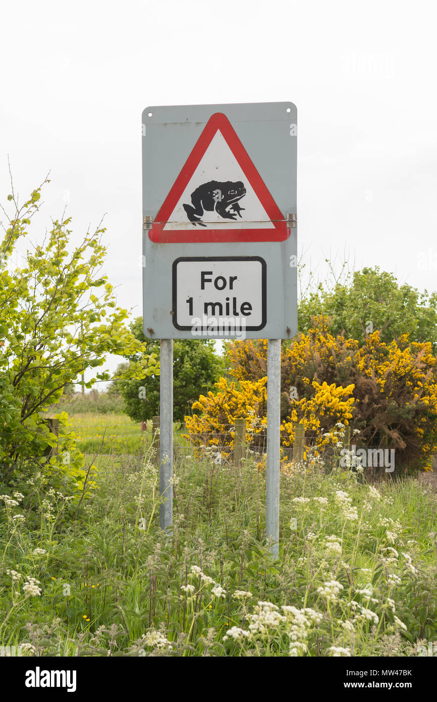 toads crossing road warning sign, UK - Stock Image