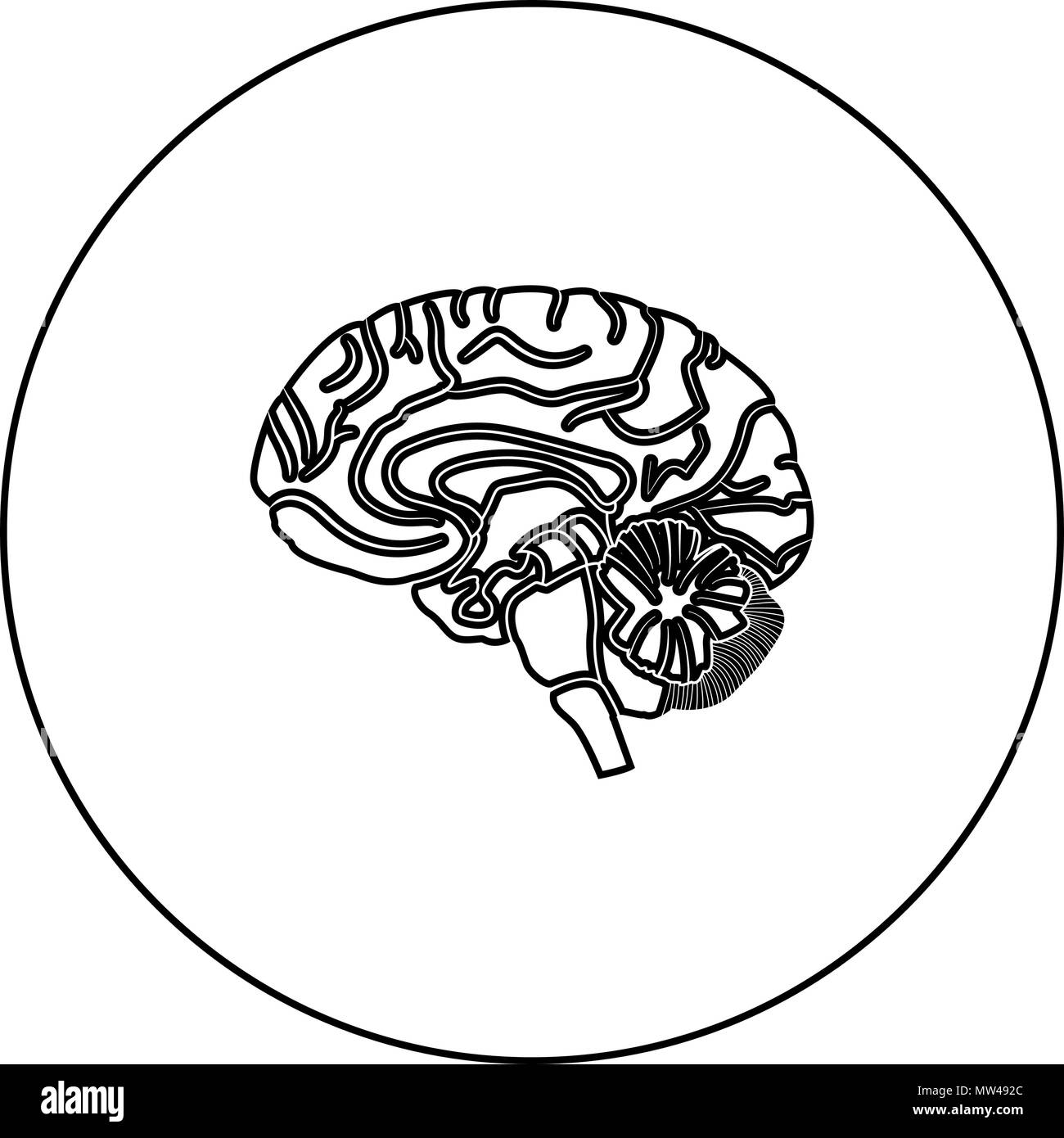 Brain black icon in circle outline vector I isolated - Stock Image