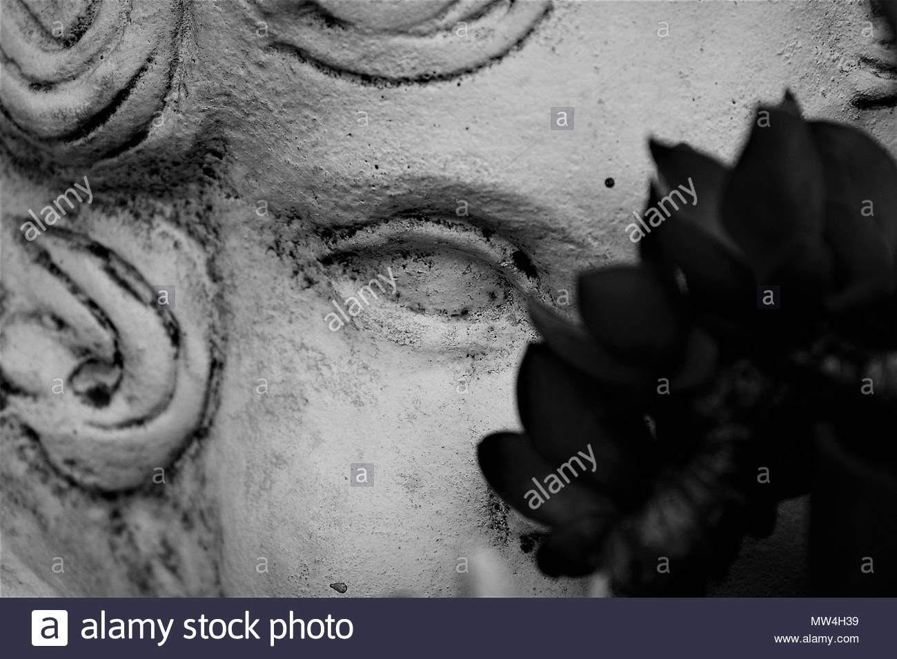 Closeup black and white photograph of the face of an angel statue slightly obscured by blurred plant