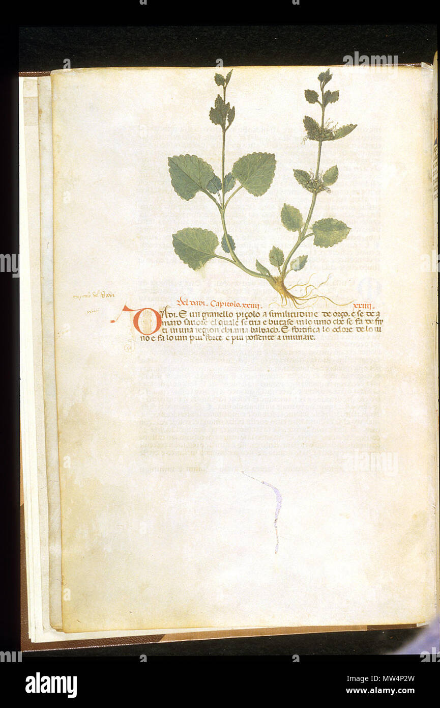 . English: arapion the Younger, Translation of the herbal (The 'Carrara Herbal'), including the Liber agrega, Herbolario volgare; De medicamentis, with index (ff. 263-265) Italy, N. (Padua); between c. 1390 and 1404 . between c. 1390 and 1404. An Italian translation, possibly from a Latin translation, of a treatise orginally written in Arabic by Serapion the Younger (Ibn Sarabi, likely 12th century). 115 Carrara Herbal11 - Stock Image