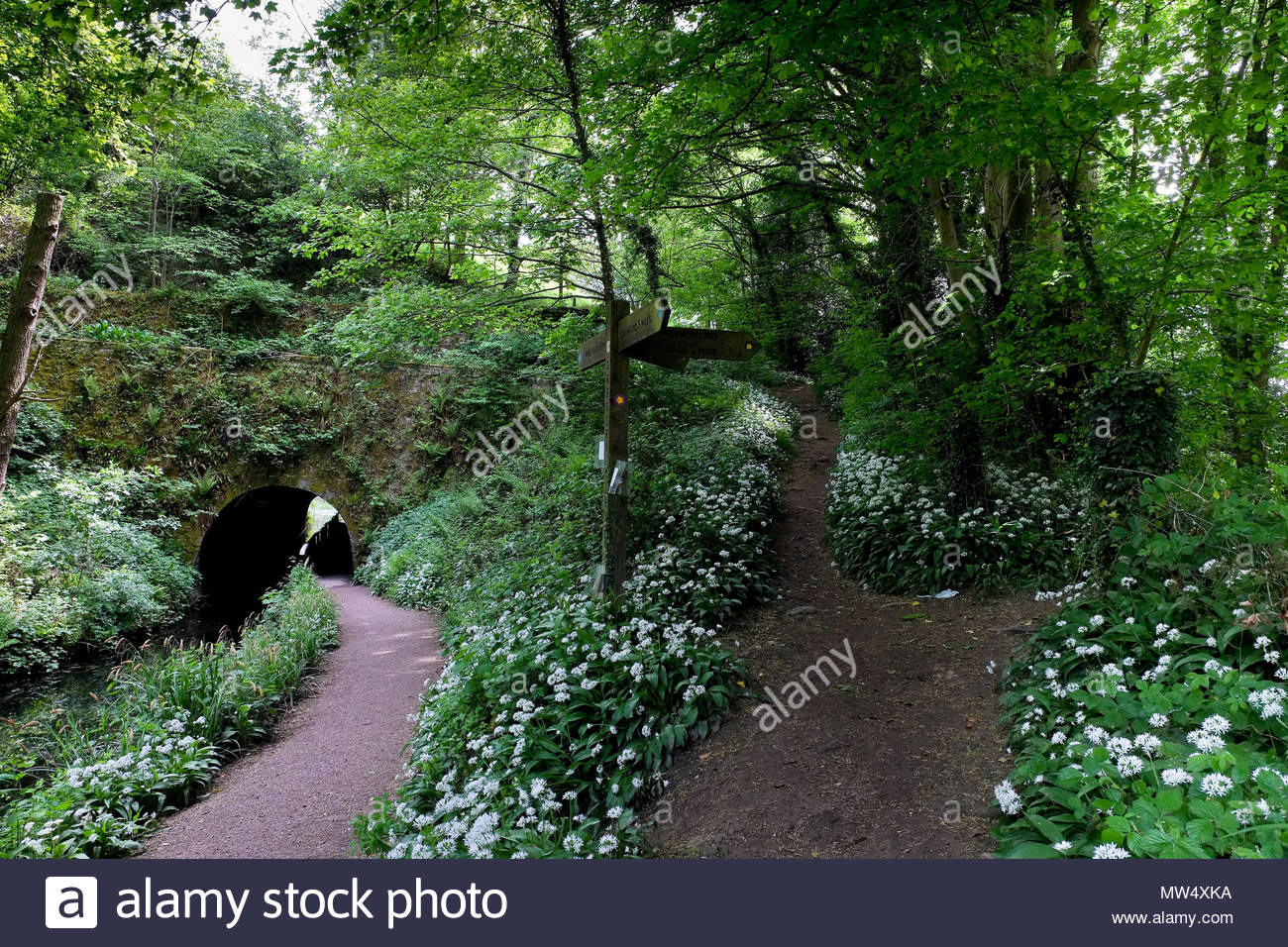 Canal tunnel, footpaths and wild garlic, Derbyshire, UK. - Stock Image