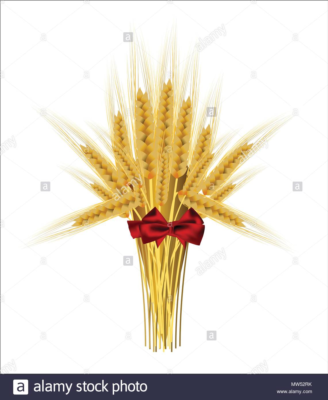 Sheaf of wheat ears with a bow on a white background - Stock Vector