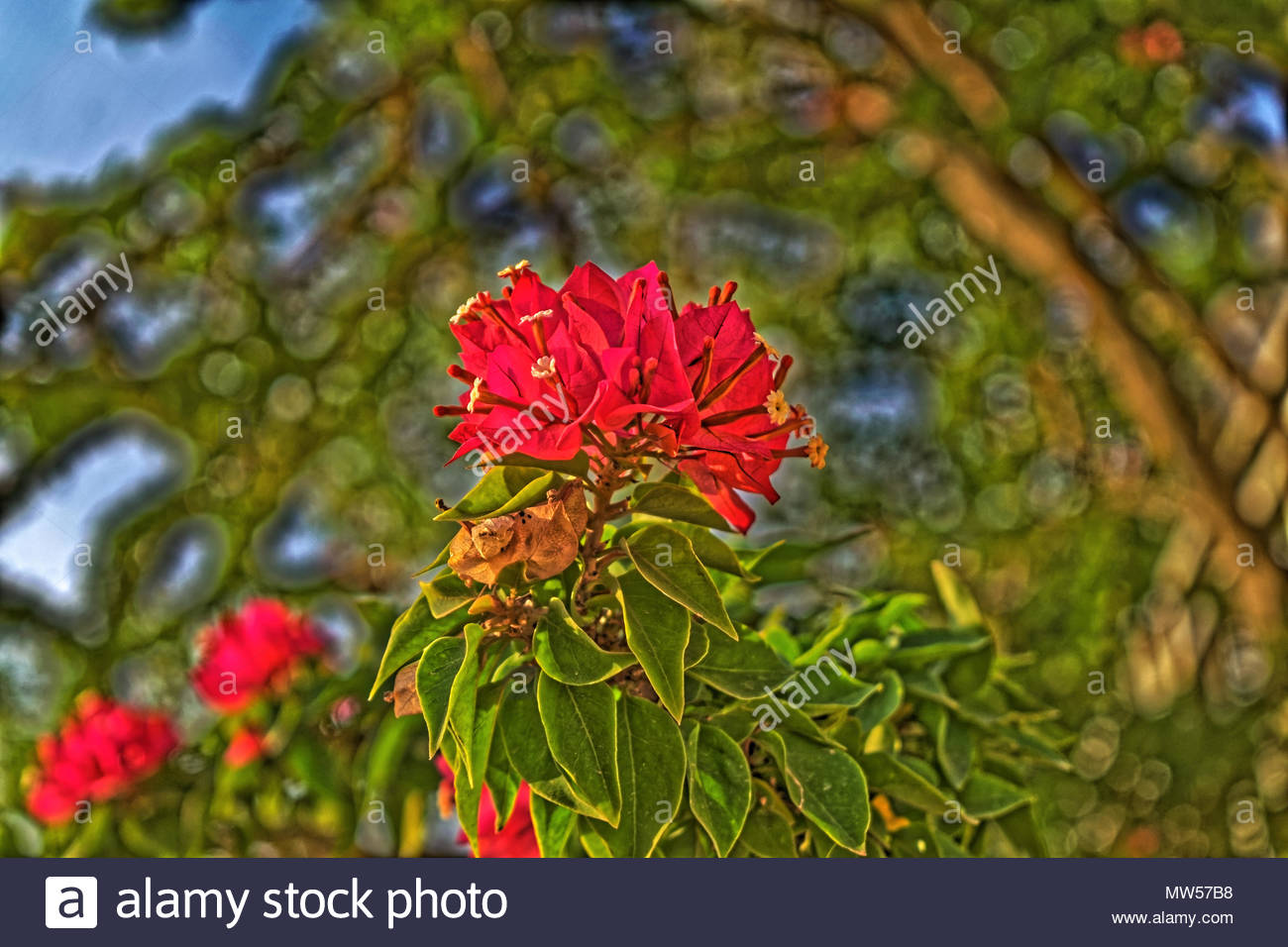 Flower meanings stock photos flower meanings stock images alamy close up photo of a flower in the sunset can have a variety of uses and izmirmasajfo
