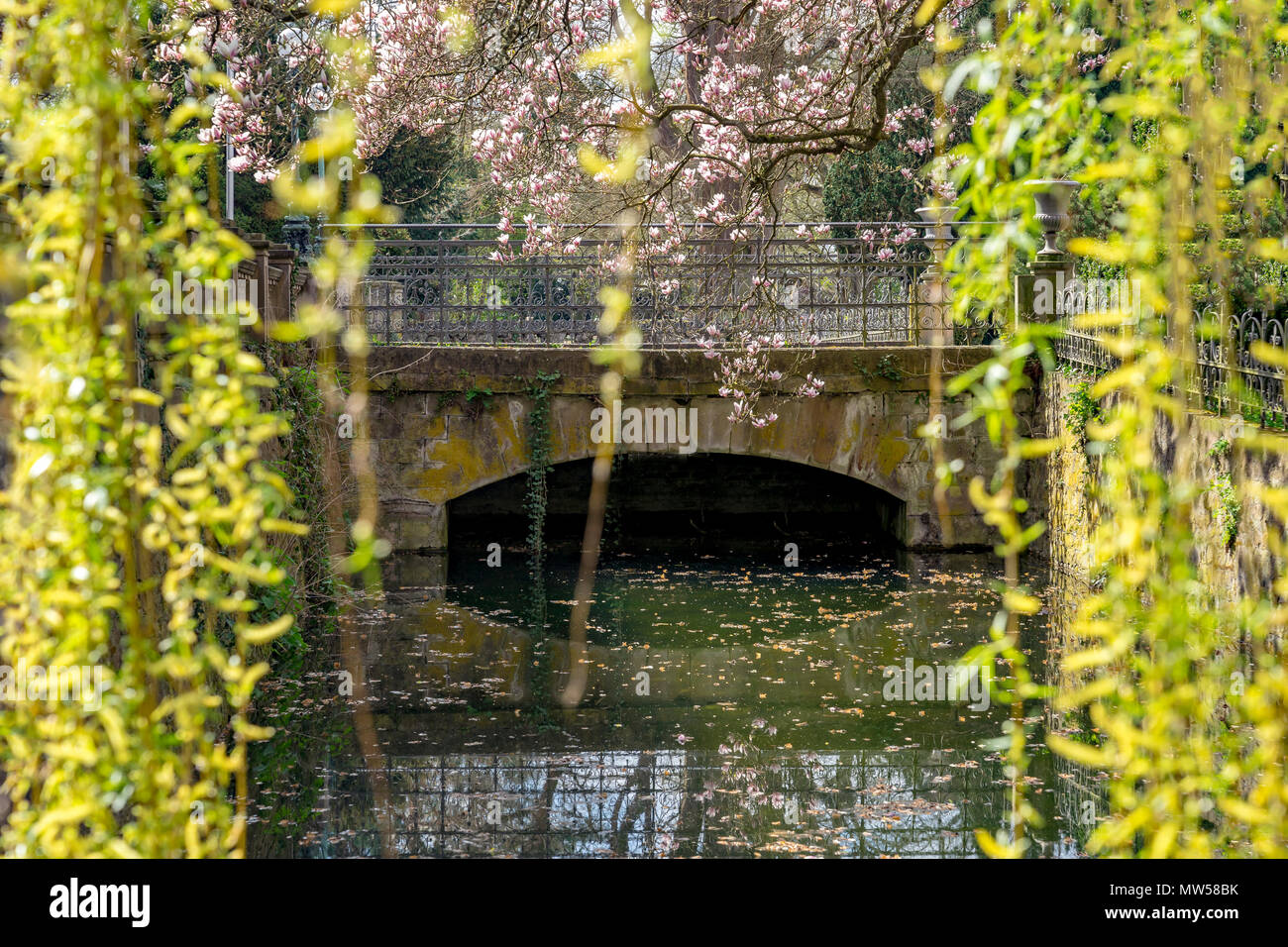 Weeping willow tree curtain with willow blossoms in spring. In the background a small bridge. - Stock Image