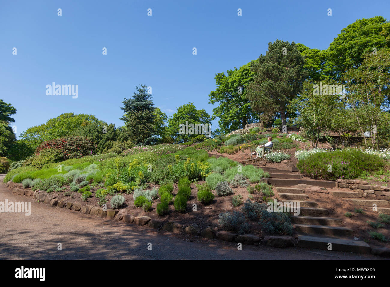 Ness gardens Wirral. Woman enjoys the sunshine - Stock Image