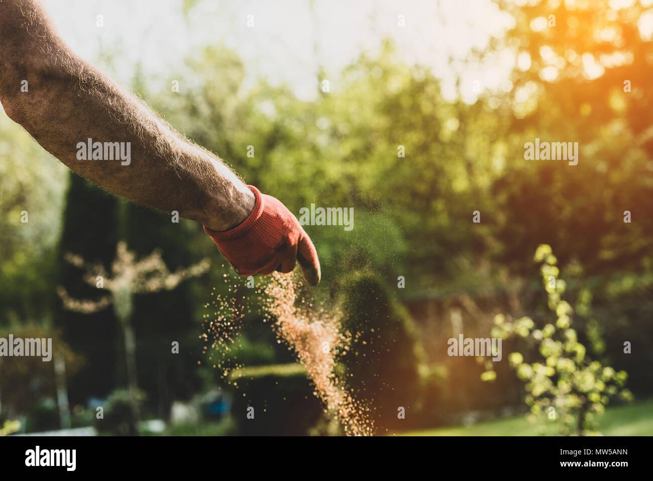 The man works in the garden. The gardener spreads the fertilizer in ...