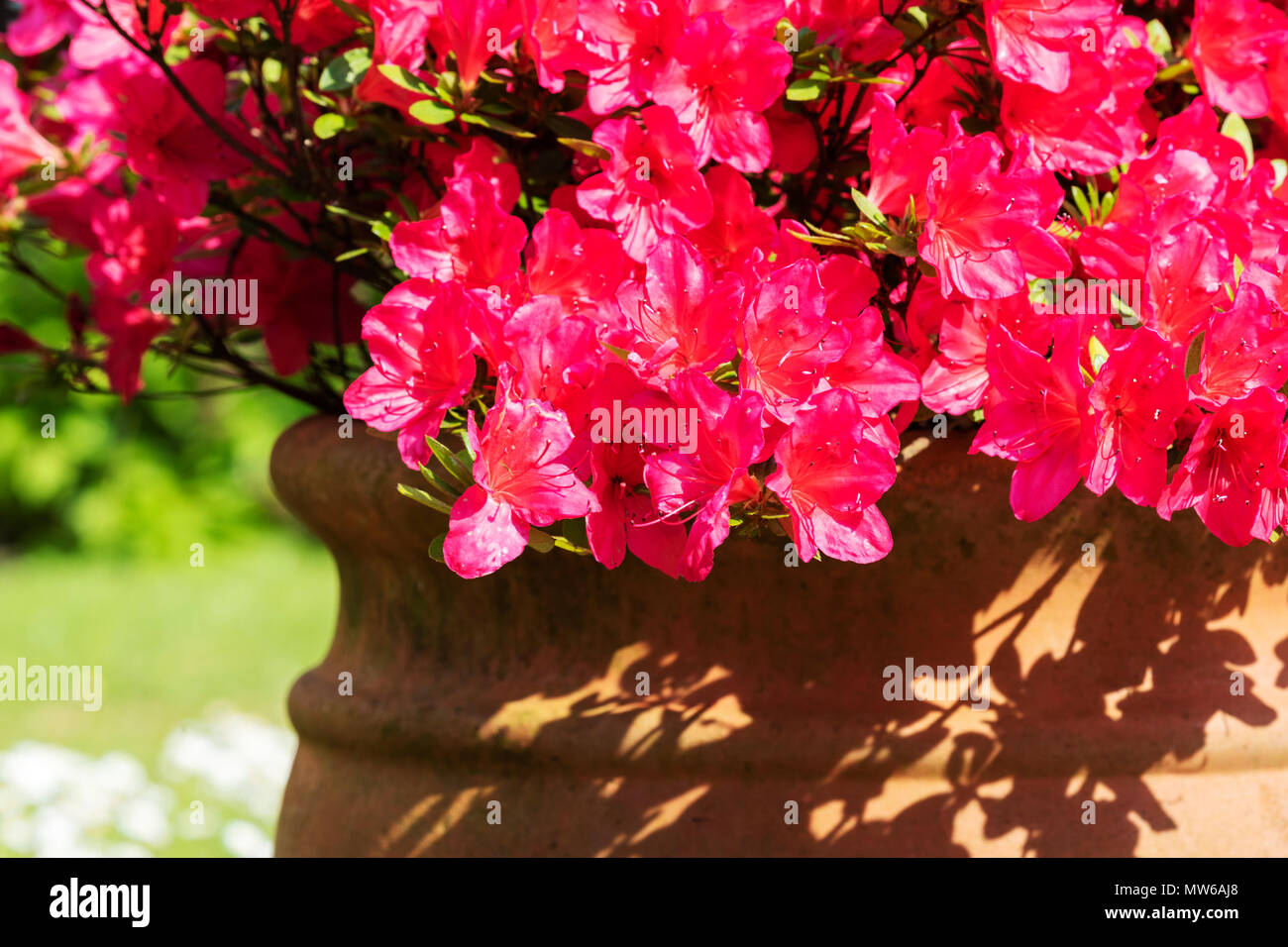 Wow, Spring is here, at last. - Stock Image