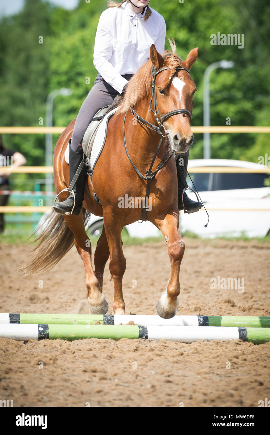 Training in horse riding, entry level. Overcoming a horseman on a bay horse obstacles - Cavaletti on a trot - Stock Image