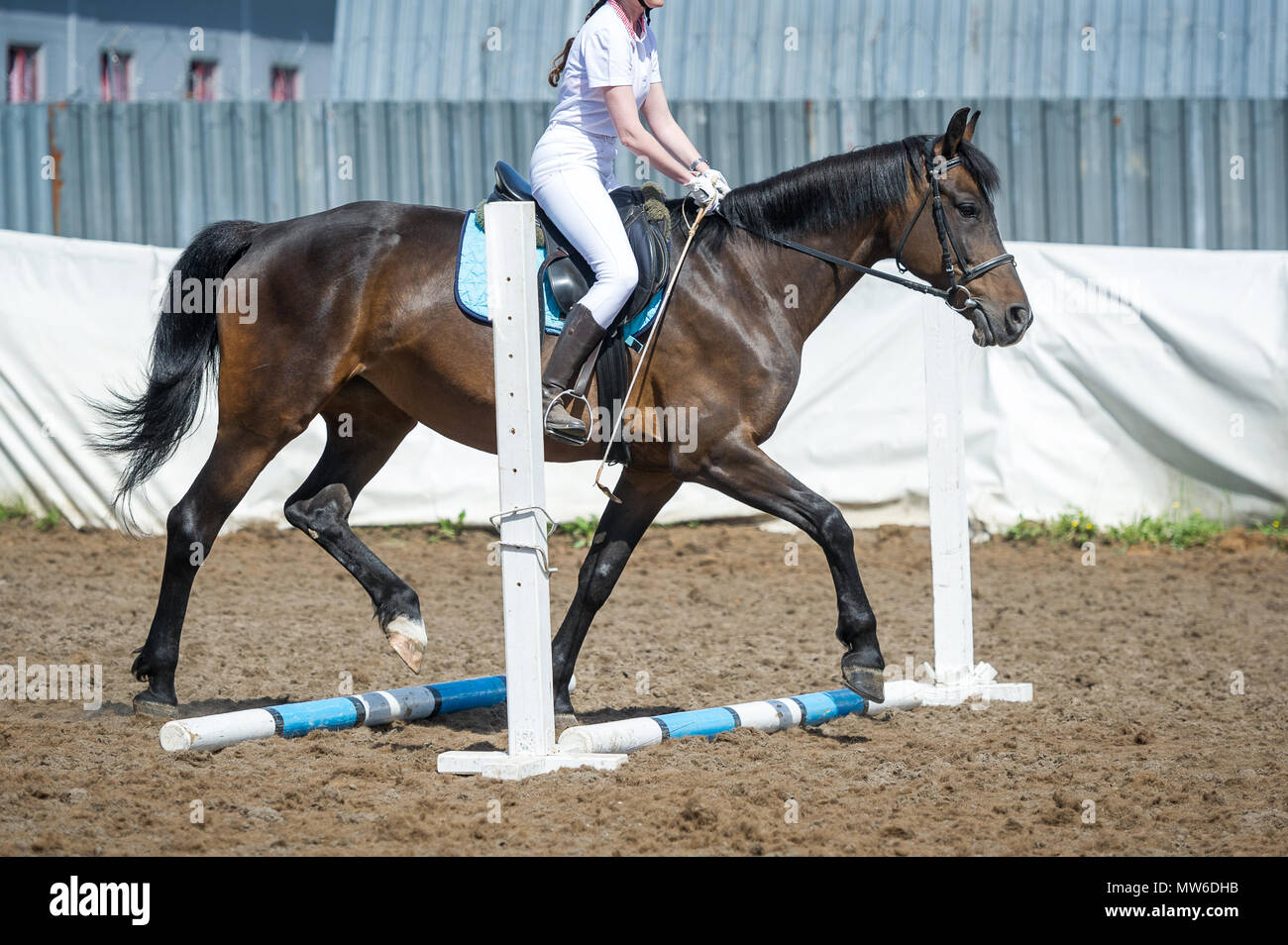 Training in horse riding, entry level. Cavaletti on a trot - Stock Image